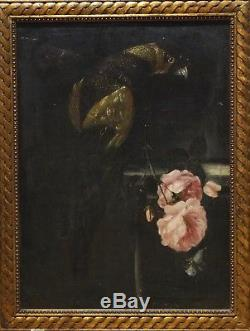 17th Century Italian Old Master Still Life Parrot Butterfly Pink Roses Painting